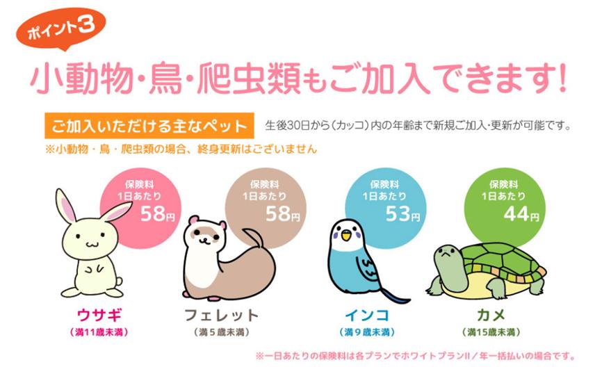 小動物・鳥・爬虫類も加入できます。ウサギ満11歳未満・フェレット満5歳未満・インコ満9歳未満・カメ満15歳未満
